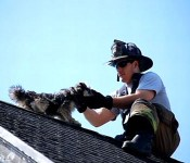 firefighters-save-dog-on-roof